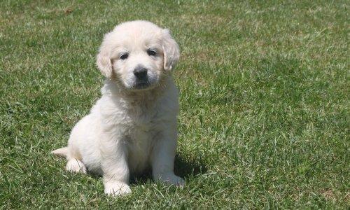 cachorros del 5-7 118